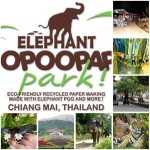 Top 10 Activities For Families In Chiang Mai